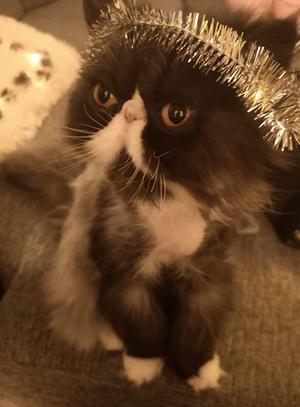 Katten Uzma. Foto Mikael Karlsson