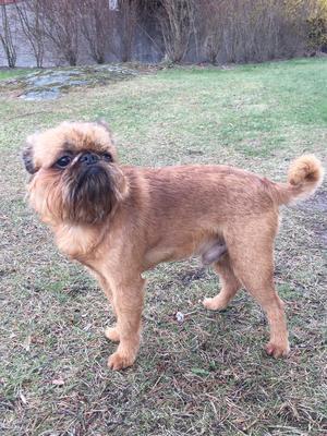 Om bilden: Han är inte som andra hundar!! Dogge heter han iallafall. Foto: Mats Johansson