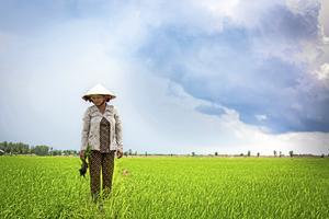 Vietnam är ett av världens mest sårbara länder för klimatförändringar och drabbas ömsom av översvämningar, ömsom av torka. Ofta drabbas kvinnliga bönder hårdast, eftersom de har sämre tillgång till kunskap, ekonomiska resurser och teknologi än männen. På bilden risbonden Do Thi Ha.