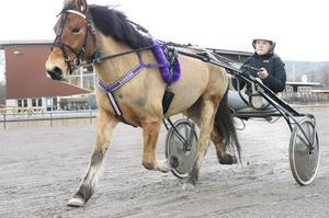 Stella Edin ger sin häst Shokata besked om full fart framåt. På söndag startar de i lopp för första gången tillsammans.