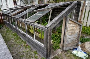 Gruppen har fixat till växthuset som bland annat huserar tomater.