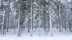 Skribenterna anser att regeringens politik slår hårt mot svenska skogsägare.
