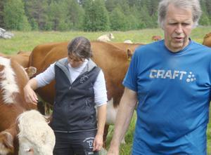 På fotot kontrollerar Paula och Erik Daabach Herefordkorna. Foto: Sture Björk