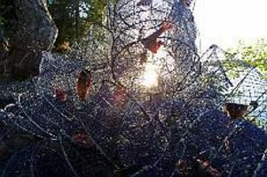 Foto: SCANPIX Redo för fångst. Burar agnade med bete för kräftiske i en uppländsk sjö Om fem år kanske liknande scener syns utmed Storsjöns stränder. Det finns en rejäl potential i Storsjön för ett bra kräftfiske enligt länsstyrelsen fiskerienhet.