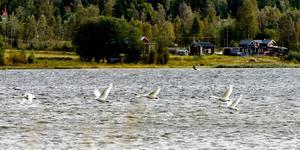 Stornäset. Utsikt, havsluft och strandängar – allt är uppdukat på Alnöns smultronställe.