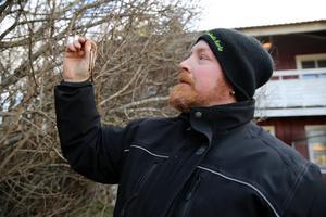 Trädgårdsmästare Lars Uleander visar syrenens knoppar.