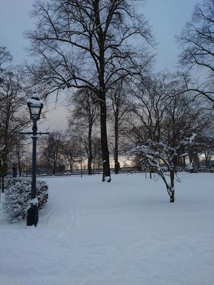 Rådhusparken i vinterskrud. Foto: Marie Ferm