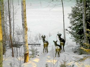 Isen varken bär eller brister i vattnet utanför Sunnanö. Bild: Göran Andersson/Arkiv.