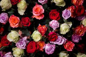 Ett stort fång rosor ska månades storjubilarer ha. Foto: TT/Arkiv.