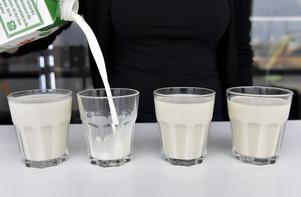 Från vänster:Mandelmjölk, mellanmjölk, sojamjölk och havremjölk. Vad är nyttigast?