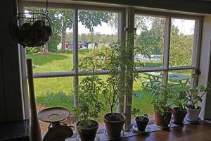 Utsikt mot husets baksida från köket.