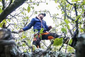 Glöm JAS-perioden. Det många kanske inte vet är att förutsättningarna faktiskt är som bäst för att beskära träd och buskar under antingen vårvintern eller senhösten.