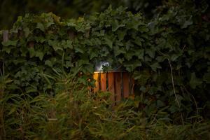 Olika ljuskällor samsas om utrymmet och skapar skuggor och kontraster i trädgårdsmiljön. Bild: Andreas Hillergren/TT