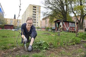 Det finns många fördelar, båda på för individer och samhället, med stadsodling. När städer förtätats blir grönytor andninghål som ökar stadens hållbarhet. Foto: Jessica Gow/TT