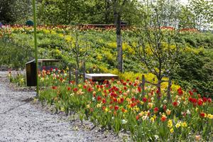 På vägen upp till picknickbordet och utsikten är det svårt att slita blicken från de färgsprakande tulpanerna.