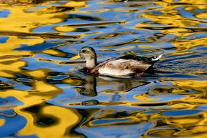 SVA kan ge råd om du misstänker att fågelinfluensa i det vilda. Bild: TT
