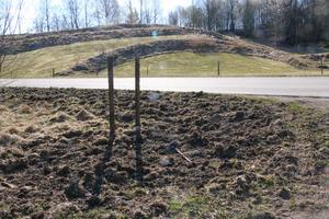 Bilden är tagen  strax innan infarten till golfklubbens stugan, där vildsvin bökat sönder stort.