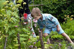 Sexårige William Helsing luktar på en av de rosa blommorna som lyser upp i köksträdgården. Annars roar de små grus- och stenlagda slingrande stigarna William mest.