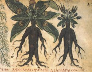 En illustration av den människolika alrunan från 600-talets Neapel.
