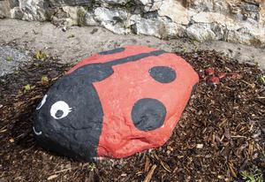 En målad sten har förökat sig och fått små nyckelpigsbebisar.