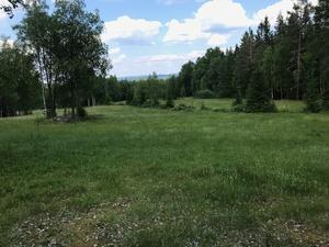 Vandringen gick i gränstrakterna mellan Ludvika och Ljusnarsbergs kommuner.