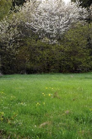 Dags att klippa gräset? Välj rätt gräsklippare.    Foto: Martin Meissner/AP
