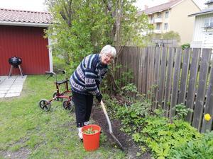 Vår 90-åriga trädgårdsentusiast Viola sköter om planteringarna i bostadsrätten.