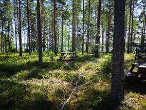 En kul idé var att man placerat ut bord i skogen, för att kunna sitta närmare vattnet och äta.