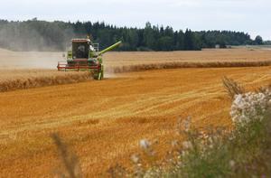 Gröna näringar. Att ha flera olika affärsverksamheter på gården gör företaget stabilare i konjunktursvängningar, skriver John Enander och Markus Pettersson.foto: scanpix