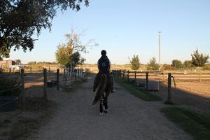 I Helsingborg kommer Hanna Nilsson fortsätta att träna och tävla sin ponny.