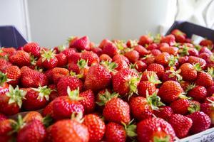 På sommarkaféet säljs Tallåsens egna jordgubbar.