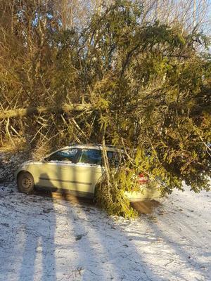 Två granar föll på en tomt i Finsta. Ena granen snuddade huset, den andra la sig över bilen.
