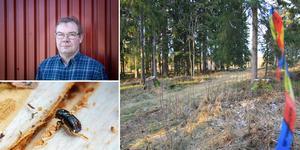 Två hektar granskog vid motionsslingan vid Knöttas i Kilafors ska avverkas.