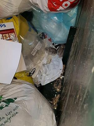 Nej, det var ingen råtta eller mus i sophuset, det var hamstrar.