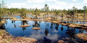 Gideåbergsmyrarna. Ett av länets första naturreservat – och kanske den vackraste orkidémyren vi har.