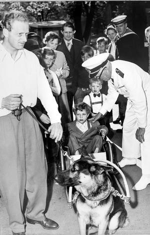 Kung Carl XVI Gustav blir dragen i vagn av hund under en uppvisning av Svenska brukshundklubben. Foto: Johan Strindberg