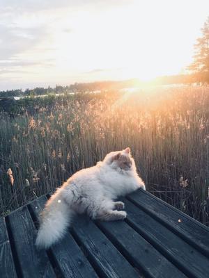 4) Veni i kvällssolen på en ö i Söderhamns skärgård Foto: Lisa Eriksson