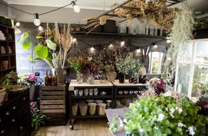 Anna har inrett sitt blomsterrum med mörka väggar och hyllor. På stegen i taket vilar torkade växter som hon gärna använder i höstens arrangemang.
