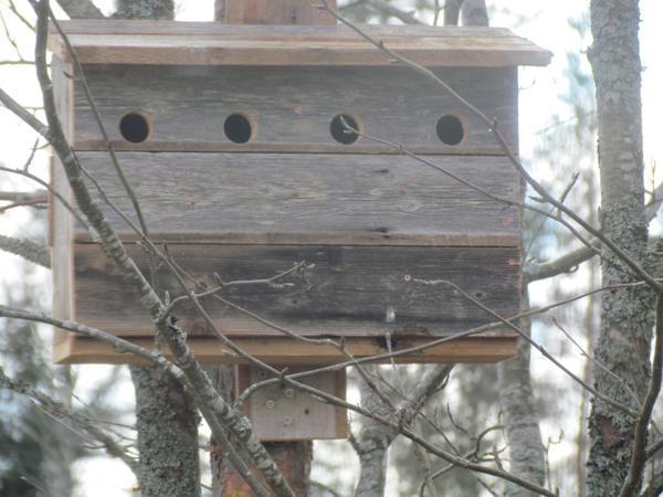 Äldreboende för fåglar i radhus