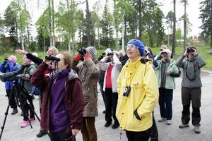 Gigi Salstrand pekar mot en rödvingetrast och alla lyfter sina kikare för att få en skymt av den vackra fågeln.