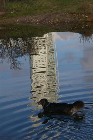 Var på besök i Malmö när min väns hund Ozzi bestämde sig för att riva Turning Torso på egen hand!