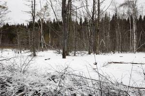 Det är åtskilliga tusen kubikmeter vatten som blivit uppdämt. All skog som fått sina rötter under vatten har dött.