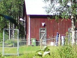 Natten mot fredagen stals den norska kvinnans hittills enda hund. Förövarna hade tagit sig in i huset genom att lyfta bort hela fönstret.