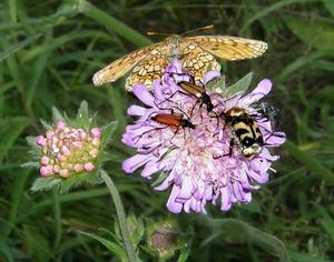 Sommarens många blommor har varit fjärilarna och insekternas älsklingsställen.