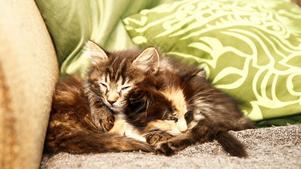 Saffran vilar ut efter äventyret i röret.  Tiger heter katten som gör henne sällskap.
