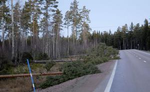 Längs vägen mellan Sollerön och Mora låg ett stort antal träd med topparna en bit ut i vägbanan.