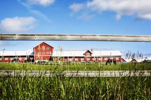 Sista helgen i juni, 26-29 juni avgörs SM på Wången i Alsen.