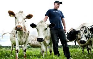 – Man får ju höra att det ska vara ekologiskt hit och dit, men likförbannat så sänker de ekotillägget. Det stämmer inte, säger en frustrerad Urban Delestig, mjölkbonde i Ljusdal.