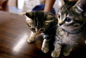 Söta katter kan vara en smittkälla för människan. Katterna på bilden har inte med innehållet i texten att göra.
