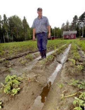 —Här gick vattnet upp till knäna på mig när det var som värst. Nu har det mesta sjunkit undan men det är bara att harva bort potatisen som är satt här, säger Åke Vedin.